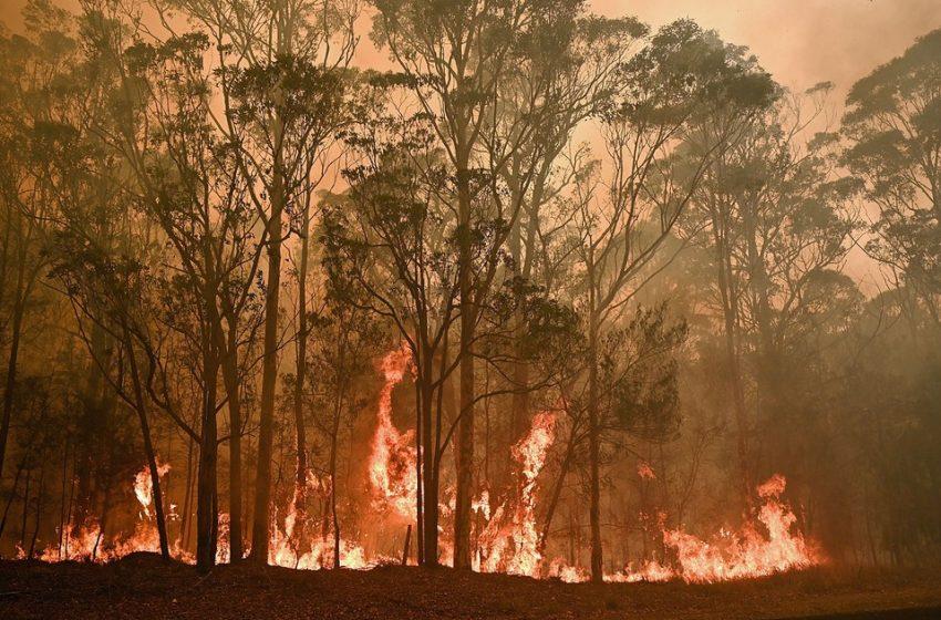 INTERNACIONAL – Meio bilhão de animais morrem em incêndios na Austrália