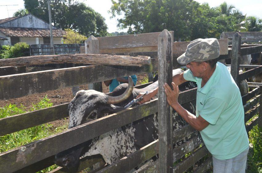 Prefeitura de São Gonçalo inicia primeira etapa de vacinação da febre aftosa