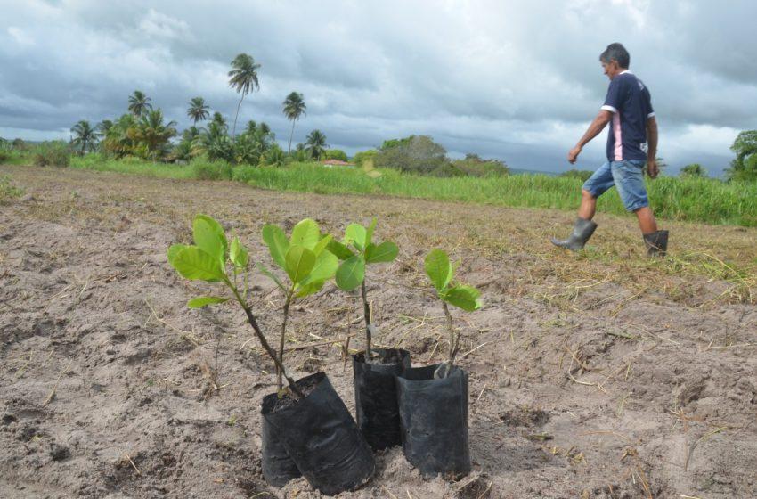 Em parceria com o Senar, Prefeitura de São Gonçalo oferta curso técnico em Fruticultura